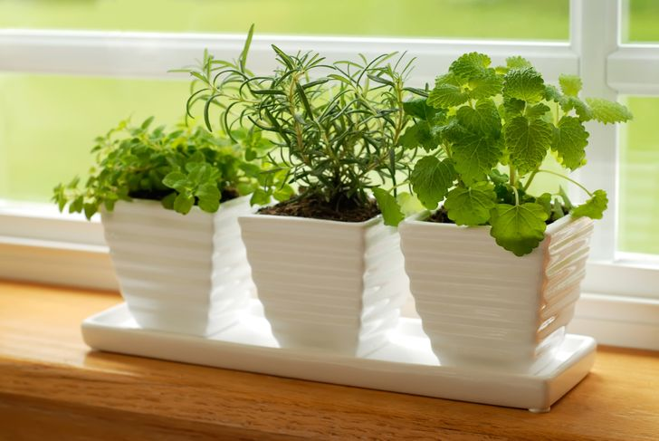12 awesome foods that are perfect for your indoor garden