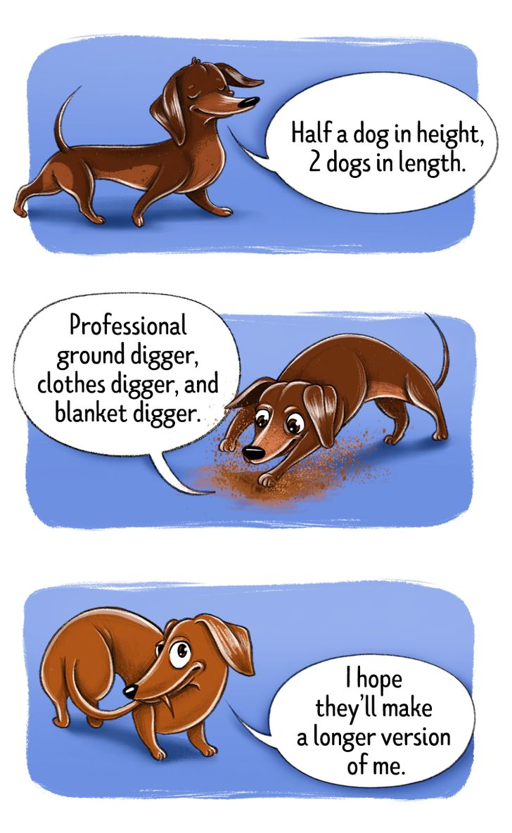 AnHonest First-Person Guide toMake You aDog Breeds Expert