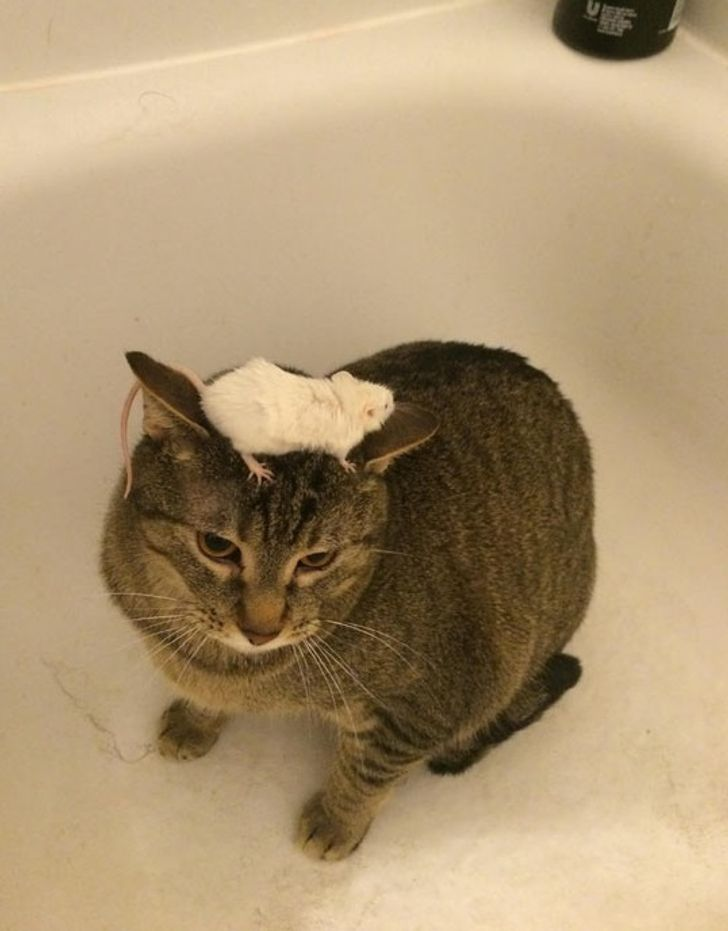 20Amazing Cats That Crashed the System