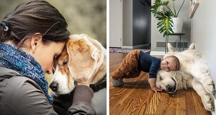 10 Things Dogs Sense Before Us That Prove Underestimating Them Is a Big Mistake
