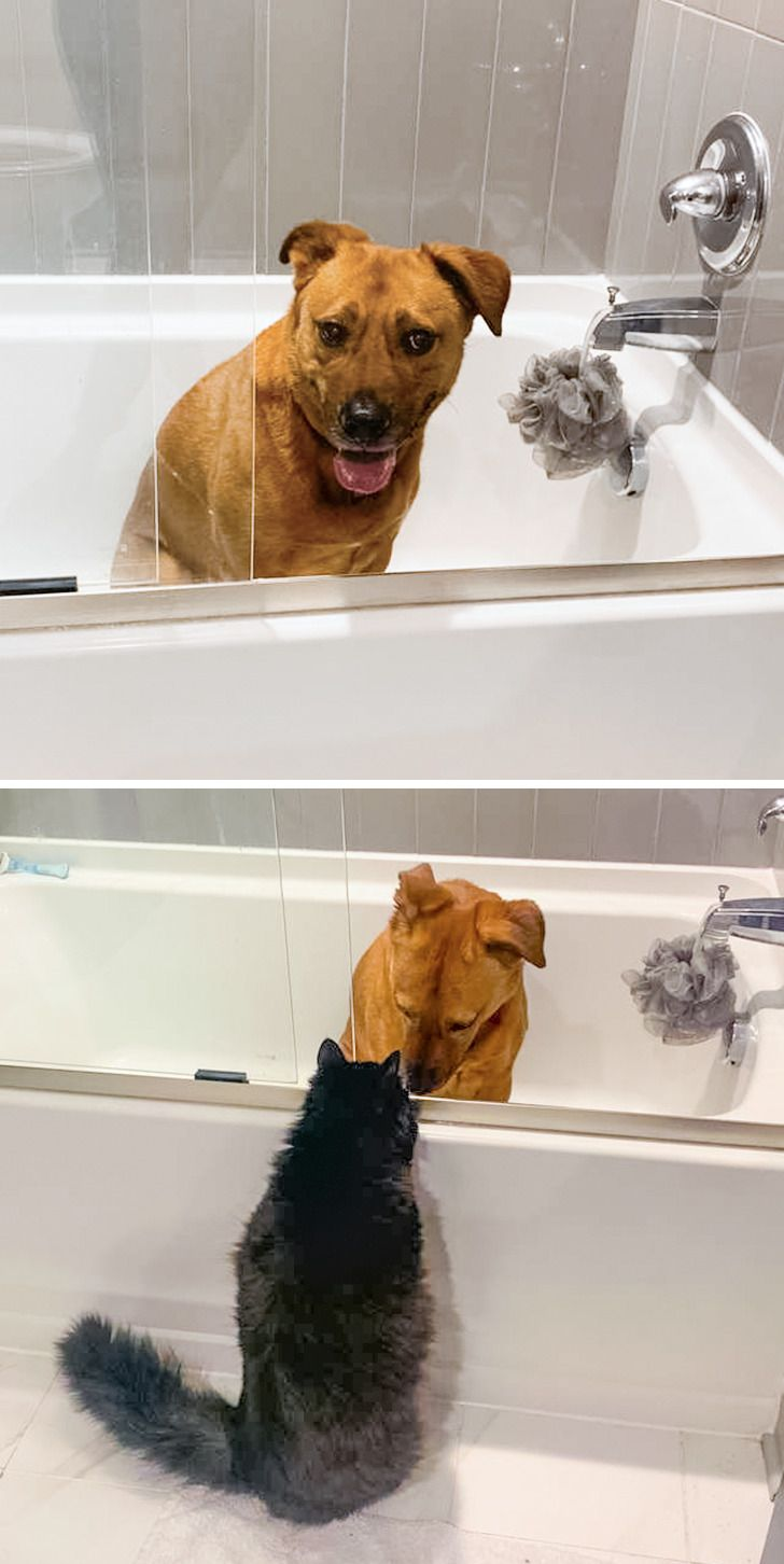 Meet Marvin, a Cat Who Comforts His Dog Buddy Who's Scared of Thunderstorms