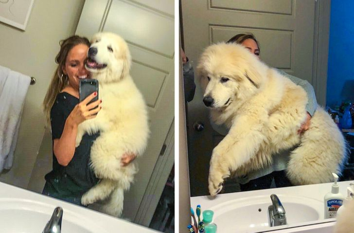 20+ People Who Wanted a Dog but Ended Up With a House Bear