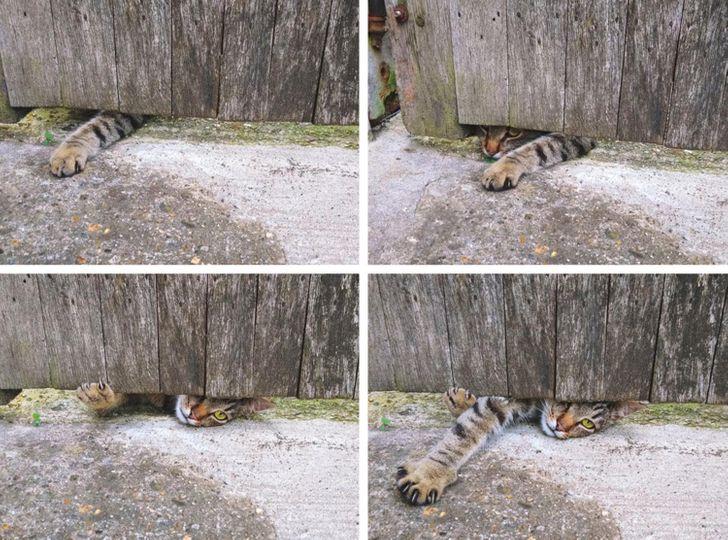 23 bằng chứng cho thấy mèo là cái loài thích ăn Pate của sen nhưng mà lại mê máy lạnh nhà hàng xóm 7