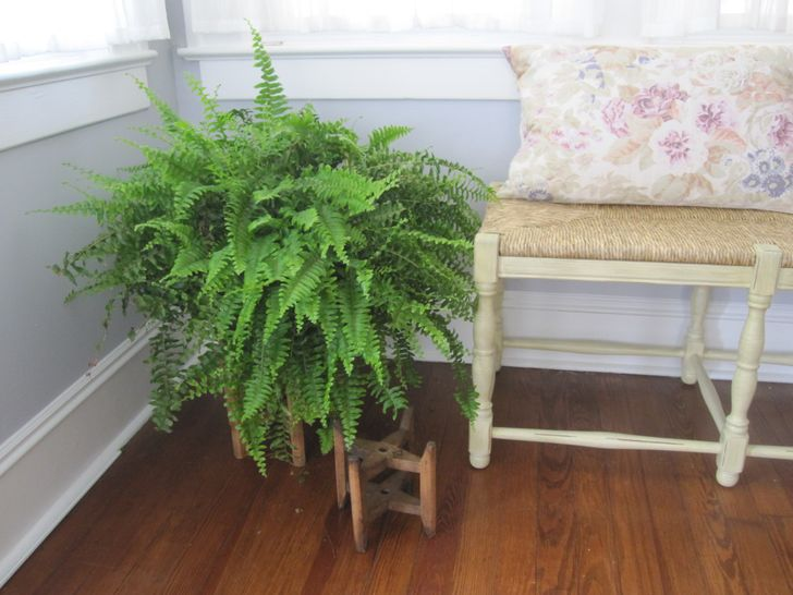 12houseplants that can survive even the darkest corner
