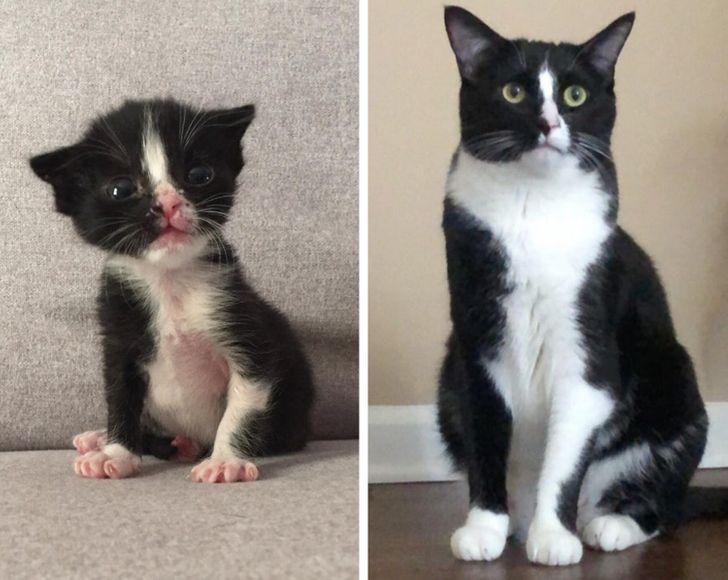 20+ Kitties and Puppies Who Gained 1 lb of Boldness and 20 lbs of Charm With Age