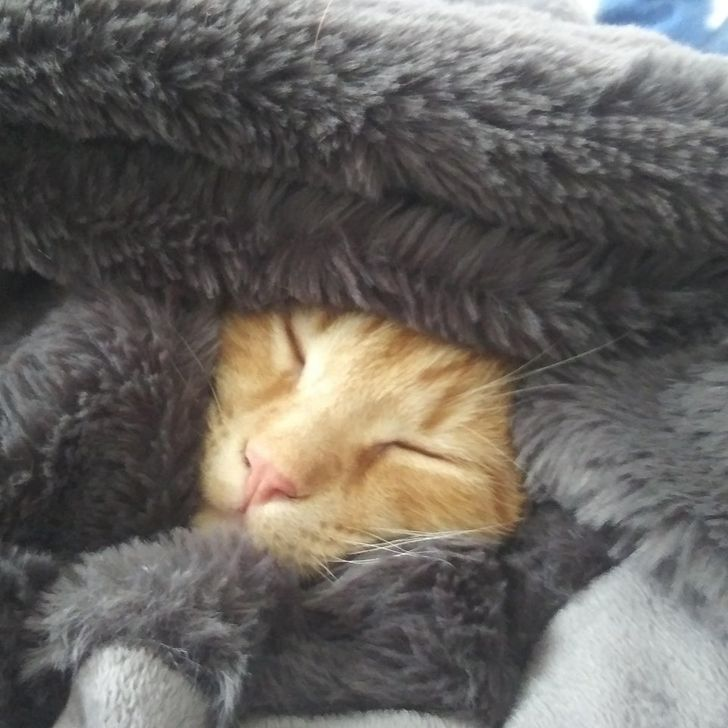 20+ Cats That Nodded Off Before You Could Even Blink