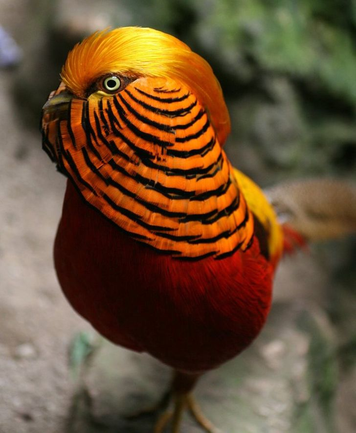 10Birds That Look More Like Aliens Than Animals