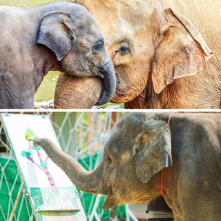 10 faktov o živočíšnom kráľovstve, ktoré dokazujú, že sa stále musíme veľa naučiť