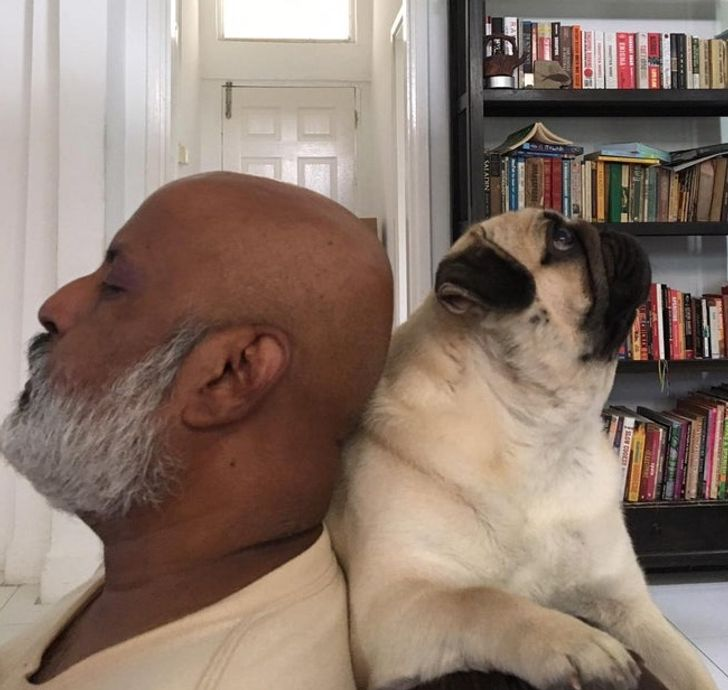 19 Photos That Prove Pets and Their Owners Are Like 2 Peas in a Pod