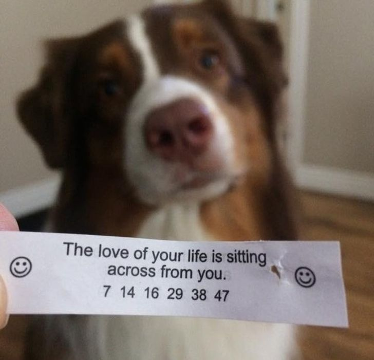 20+ Photos Every Pet Owner Can Easily Relate To