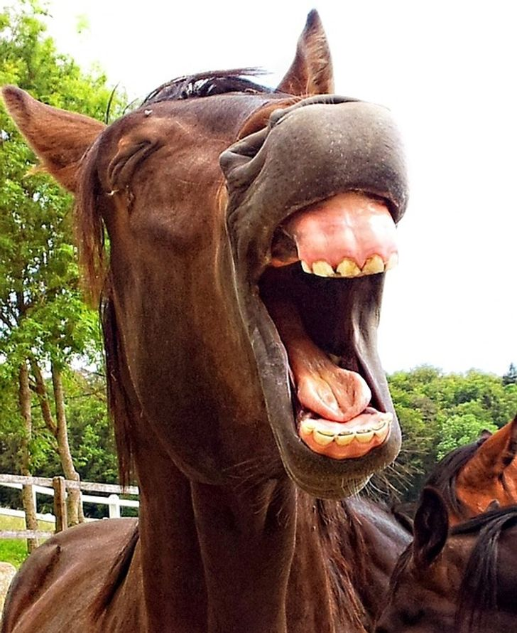 20Animals WeThought Were Adorable Until They Yawned