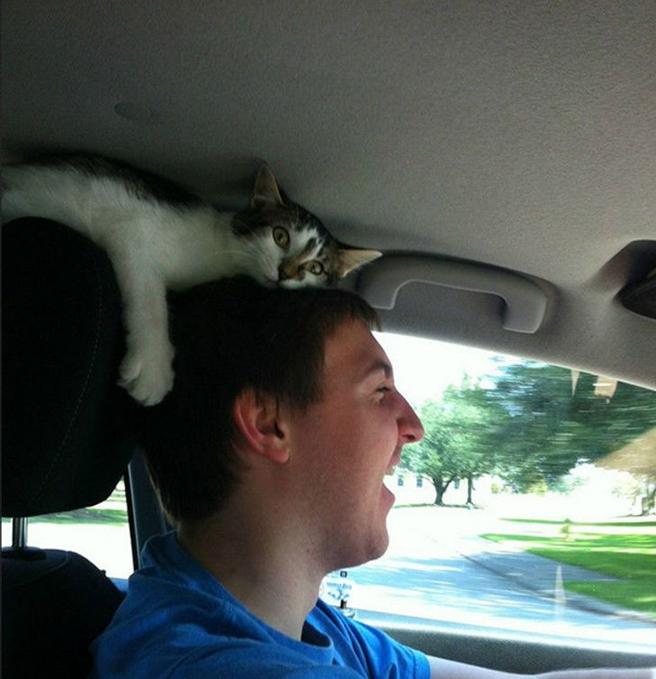 18ridiculous cats who don't understand the meaning ofpersonal space
