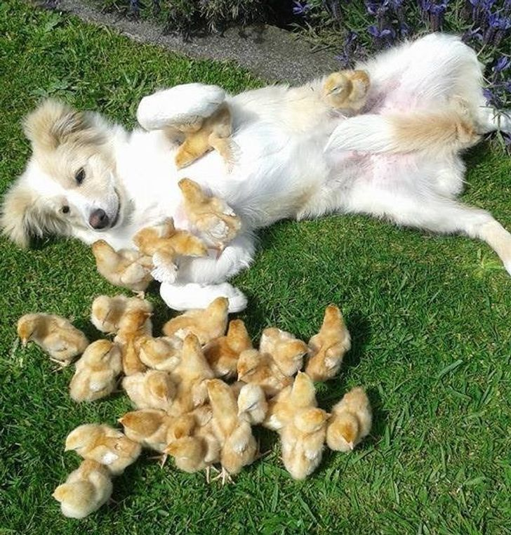 20+ Animal Babies Who Love To Smother Their Moms With Attention