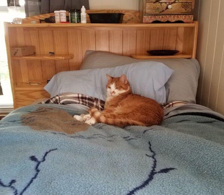 17 pisici care cred că sunt regii și reginele universului și nici nu îndrăznim să protestăm