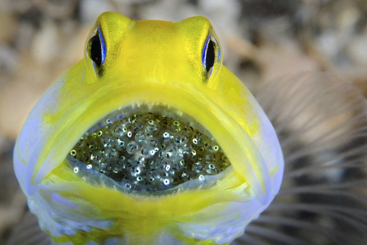 10 Bedazzling Animal Pregnancies That Show How Wise Mother Nature Is