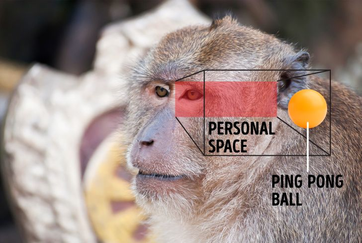 """Your Need for Personal Space Is Legit, a Scientist Says, It's Your """"Second Skin"""""""