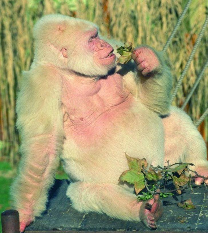 20Rare Animals That May Soon GoExtinct
