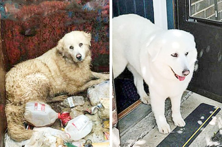 """11Rescued Animals That Deserved aBetter Life and GotIt (The """"Before"""" Photos Might Break Your Heart)"""