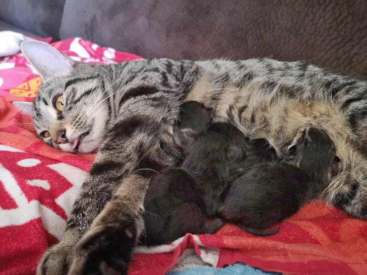 25 Photos That Show What It Means to Be a Mother