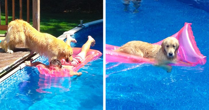 24Animal Photos That Are SoBaffling, You Might Need aSedative toLook atThem