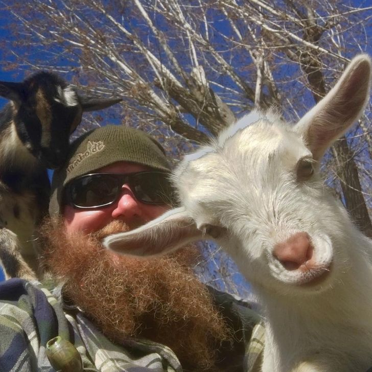 25+ Baby Goats That Are Sweeter Than Baby Yoda