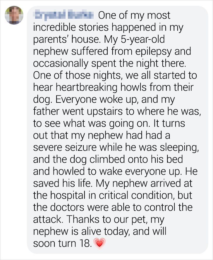 18 Bright Side Readers Shared How Their Pets Became Heroes When Danger Was Close