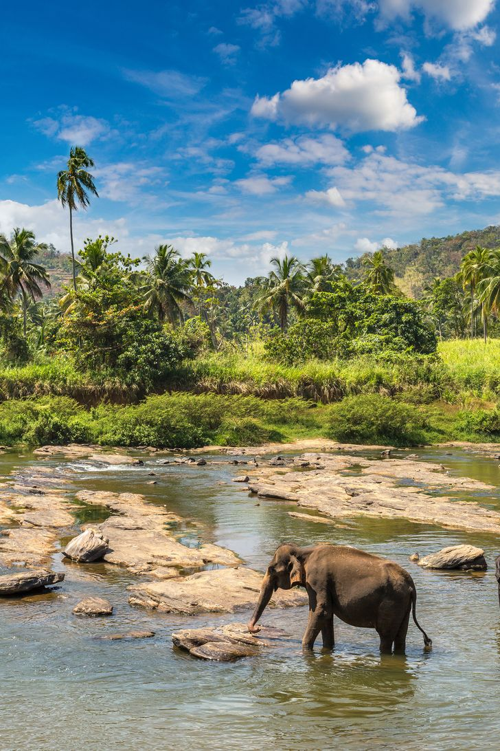 Tea Fields, Palm Trees, and Temples: 15+ Stock Photos to Feel Modern Sri Lanka's Vibes