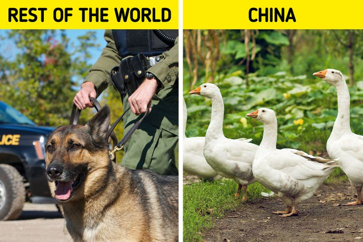 10 Things Chinese People Do That Can Make You Feel Like You're Visiting a Parallel Universe