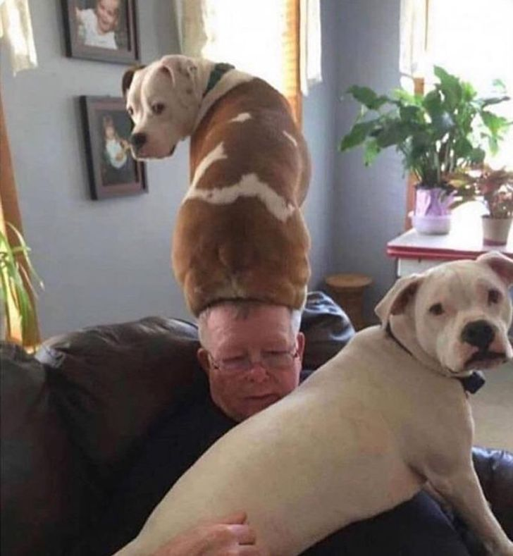 18 Dogs That Tried to Be Good Boys but Failed Dramatically