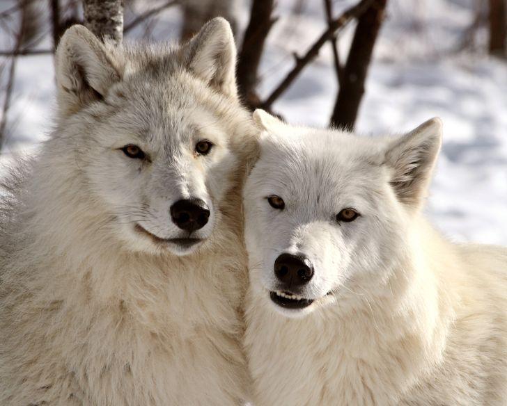 15 Správanie, ktoré zvieratá a ľudia nevedomky zdieľajú