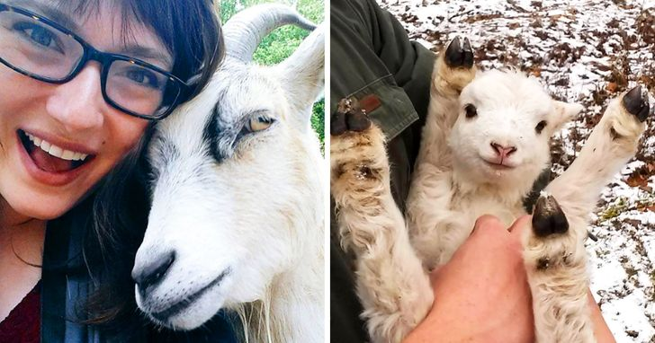 Goats Can Recognize Emotions and Are Attracted to Smiling, Happy Faces