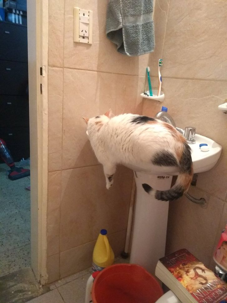 20+ Times Cats Showed Their True Rebel Souls