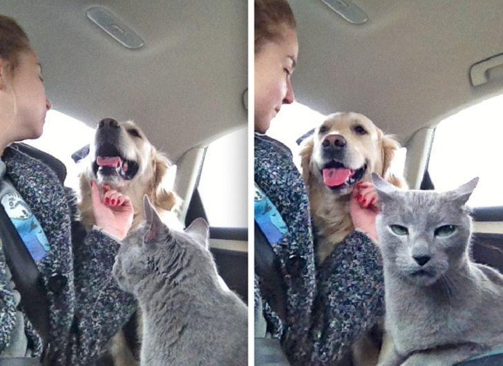 20+ Pictures Showing That Pets Can Completely Change Your Life