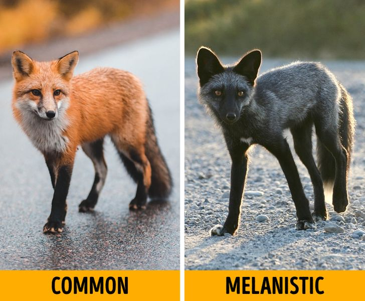 16 Melanistic Animals That Are the Truest Children of the Night
