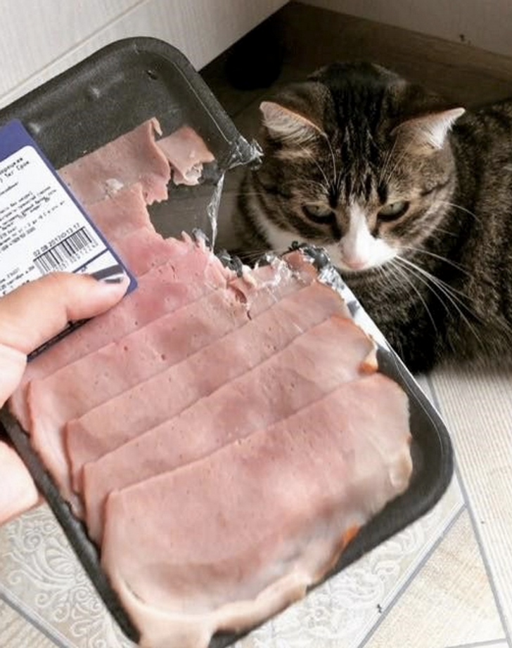 24Photos Proving That Pet Owners Deserve aMedal for Their Patience