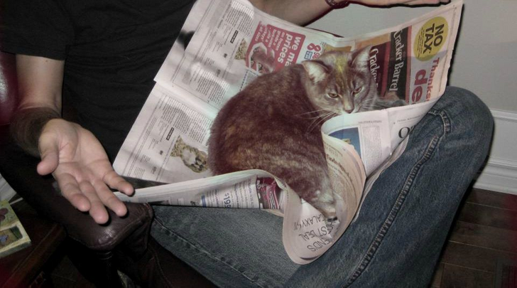 17Cats and Dogs Who Cannot DoWithout Their Humans