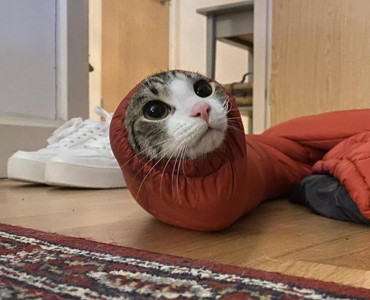 20 hình ảnh vụng về của các bé chó mèo lại trở nên vô cùng dễ thương trong mắt các con sen u mê 20