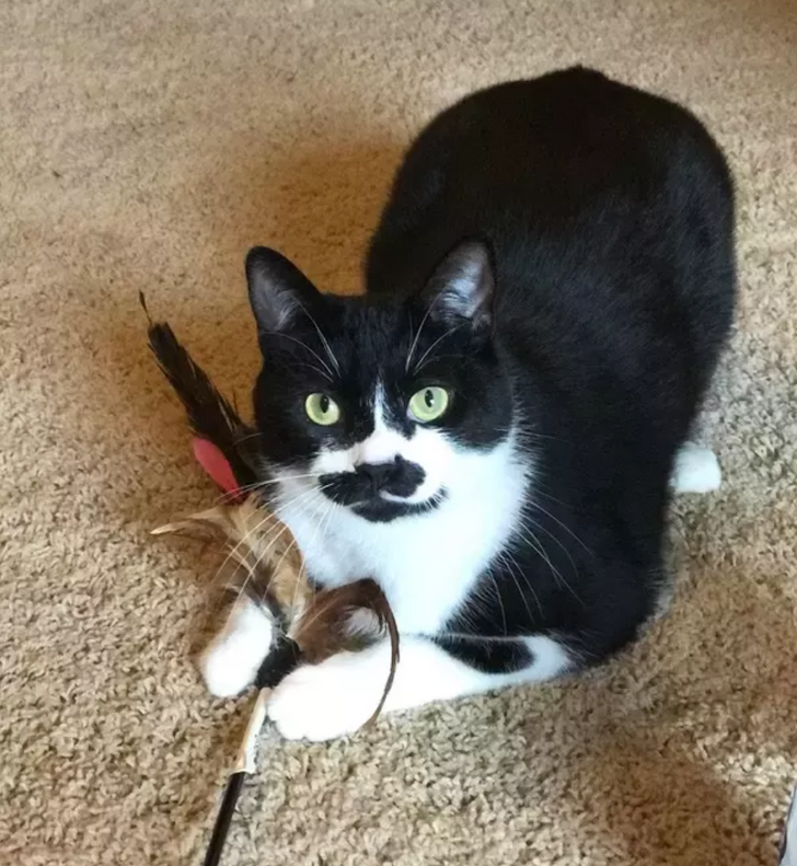 16 People Who Didn't Want a Pet Cat but Those Whiskery Fluffies Had Other Plans