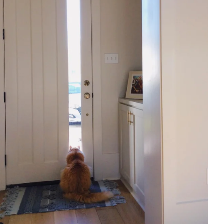 20+ Pets Who Proved to Be Remote Workers' Best Friends