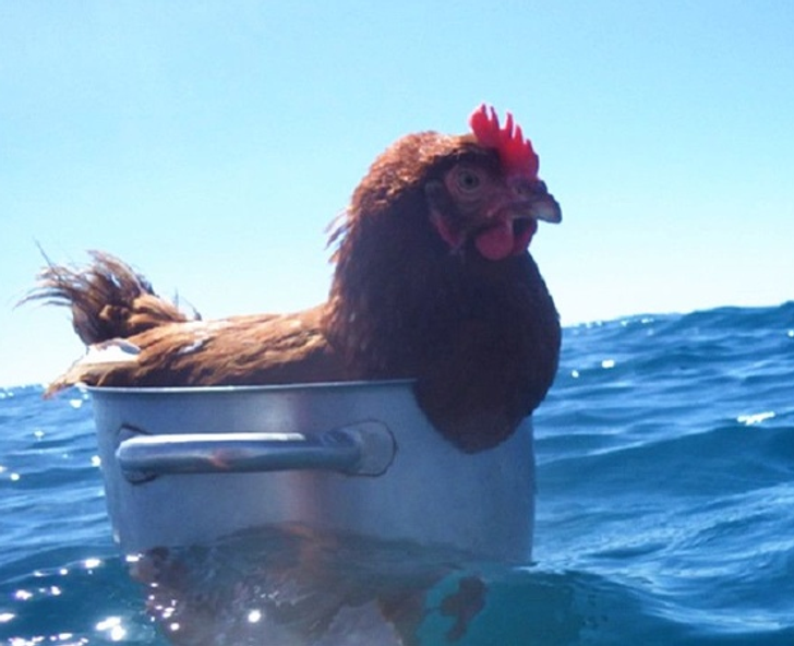 26Animals That Are Way Too Good atTaking ItEasy