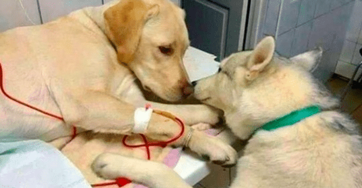 15+ Pics That Prove Support Is the Most Precious Thing in Life