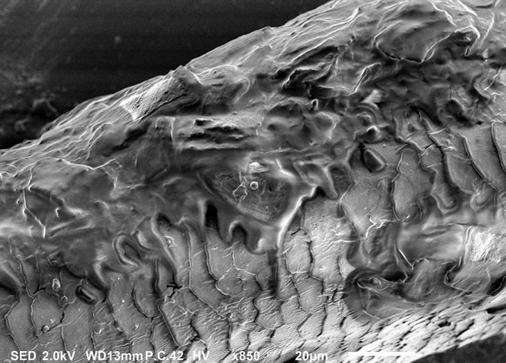 20 de lucruri obișnuite care arată atât de ciudate sub un microscop se pare că aparțin unui univers paralel