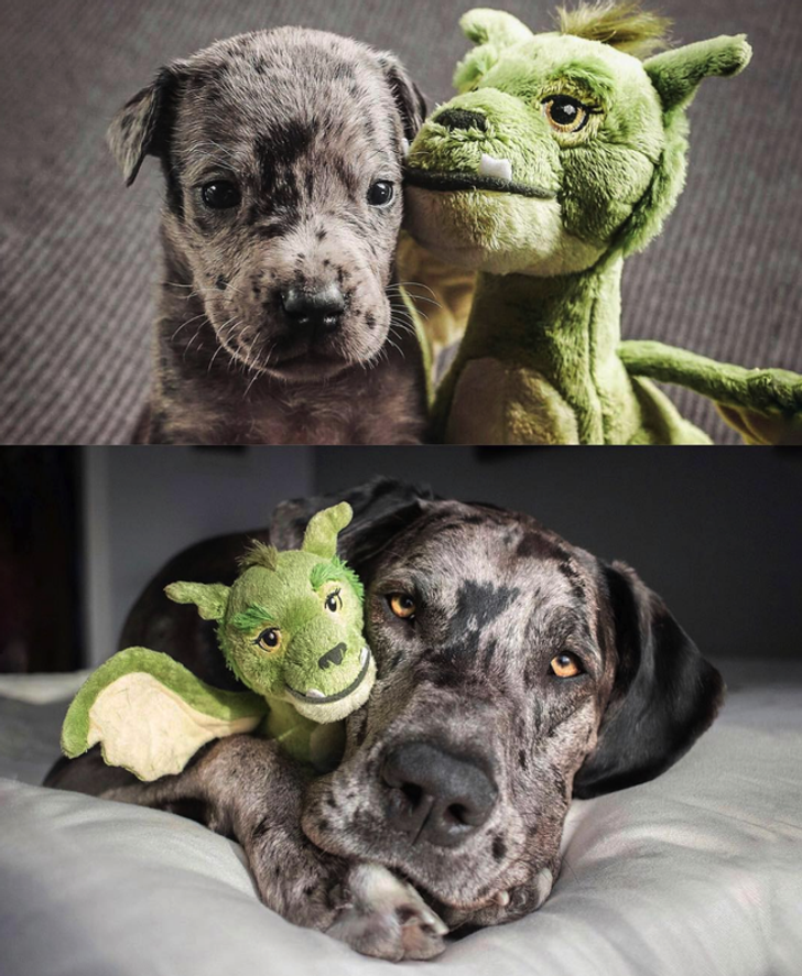 20 Before and After Animal Photos That Show How Precious Time Is