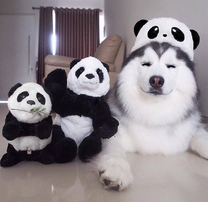 24Chubby Animals That Are Aiming Straight atYour Heart