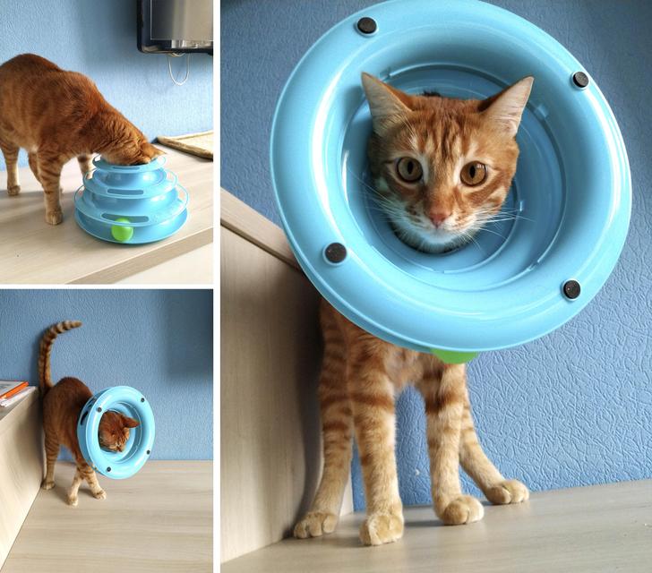 20 hình ảnh vụng về của các bé chó mèo lại trở nên vô cùng dễ thương trong mắt các con sen u mê 16